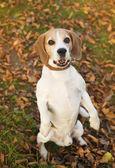 Söt hund — Stockfoto