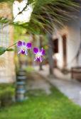 Green tropical garden — Stock Photo