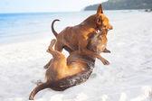 Dogs on beach — Stock Photo
