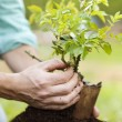 Male hands planting small tree — Stock Photo #45758971