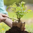 Male hands planting small tree — Stock Photo #45758975