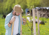 Gardener looking after trees — Stock Photo