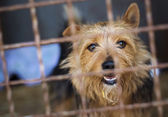 Dog in animal shelter — Stock Photo