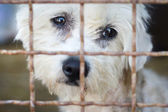 Cão no abrigo de animais — Foto Stock