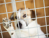 Dog  waiting for home — Stock Photo