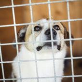 Cão esperando em casa — Foto Stock