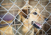 Dog in animal shelter — Stock Photo