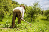 Farmer with a hoe weeding — Stok fotoğraf