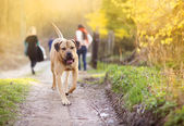 Dog walking in forest — Stock Photo
