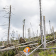 Rescue worker at destroyed forest — Stock Photo #49713541