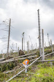 Rescue worker at destroyed forest — Stock Photo