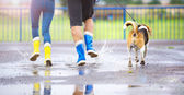 Couple running with dog — Stock Photo