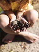 Hands holding pine cones — Stock Photo