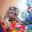 Kitten playing with a gift — Stock Photo #15728321