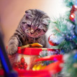 Kitten playing with a gift — Stock Photo #15728391