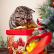 Kitten playing with a gift — Stock Photo #15728531