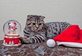 Chaton jouant avec un cadeau — Photo