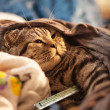 Sick cat — Stock Photo