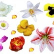 Flower Mix — Stock Photo