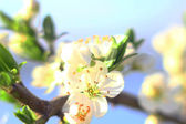 Background with blossom — Stockfoto