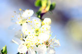 Background with blossom — Foto de Stock