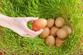 Chicken eggs between green wheat — Stock Photo