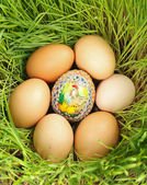 Colored egg between unpainted eggs — Stock Photo