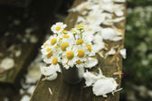 Strauß gänseblümchen — Stockfoto