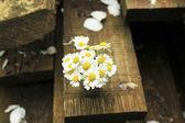 Bouquet di margherite — Foto Stock