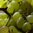 White grapes close-up shot. — Stock Video