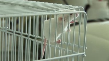 Experiments on laboratory mice — Stock Video