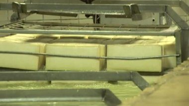 Plant for the production of cheese — Stock Video