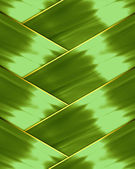 Light green background intertwined — Stock Photo