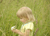 Beautiful little girl gathers a bouquet of daisies — Stock Photo