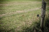 The area enclosed by barbed wire — Stock Photo