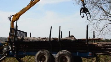 Special cargo truck with crane unload logs from truck. Forest fell. — Stock Video