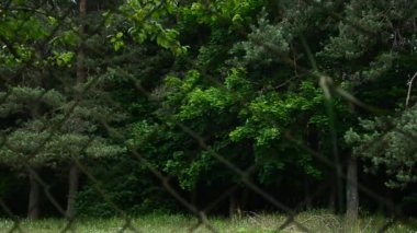 Green dark forest behind the iron fence — Stockvideo