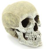 Model of Human Skull — Stock Photo