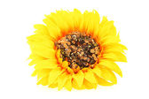Artificial Sunflower — Stock Photo