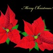 Christmas card with red poinsettias — Stock Photo