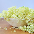 Stock Photo: Elderflower