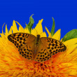 Sunflower and butterfly - closeup — Stock Photo
