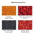 Selection of autumn berries — Stock Photo