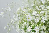 Baby's breath flowers — Stock Photo