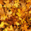 Royalty-Free Stock Photo: Leaves in fall