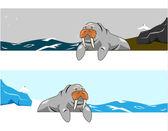 Walrus vector — Stock Vector