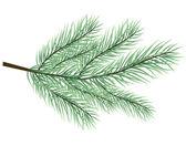 Kürk-ağaç dalı vektör — Stok Vektör