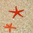 Royalty-Free Stock Photo: Red starfish in  the beach