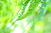 Fern close-up in sunny forest — Stock Photo