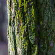 Trunk with moss — Stock Photo